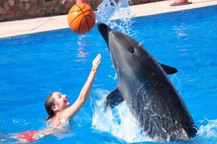 dolphin-show-and-swimming-in-sharm-el-sheikh-619683_751x500